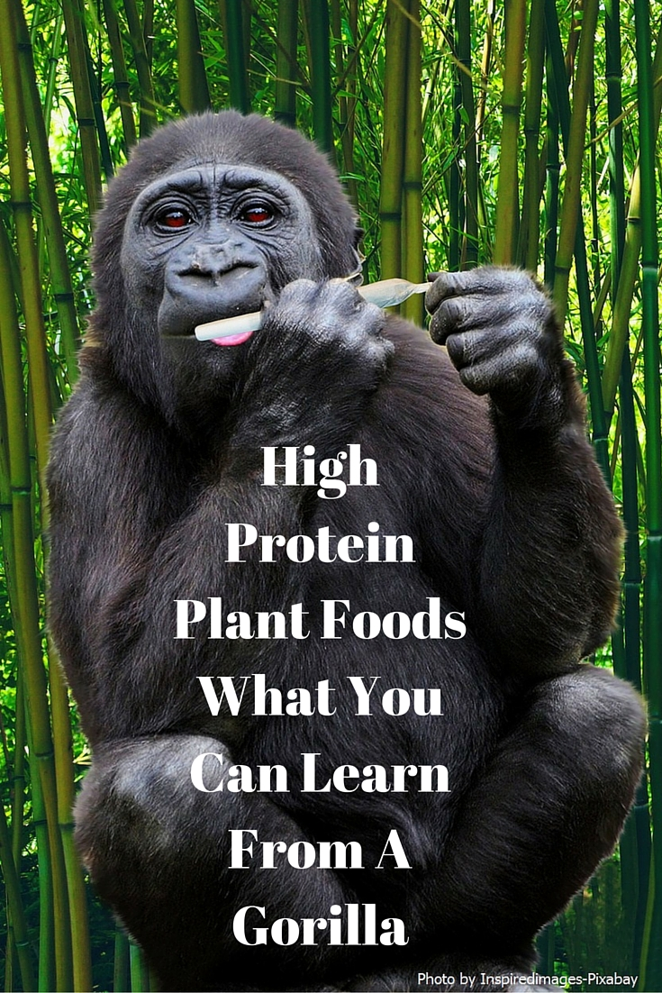 High-Protein-Plant-Foods