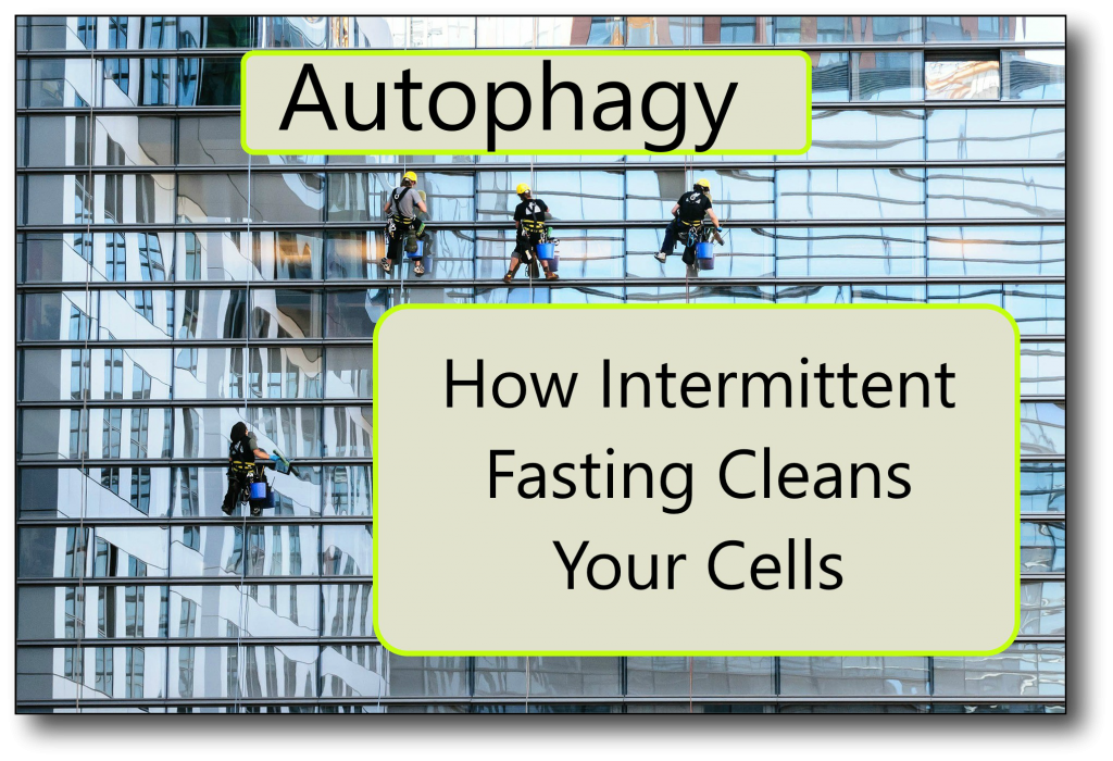 Intermittent Fasting and Autophagy - How Fasting Cleans Your
