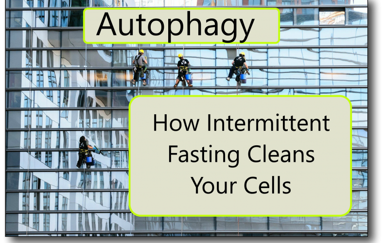 Intermittent Fasting and Autophagy – How Fasting Cleans Your Cells