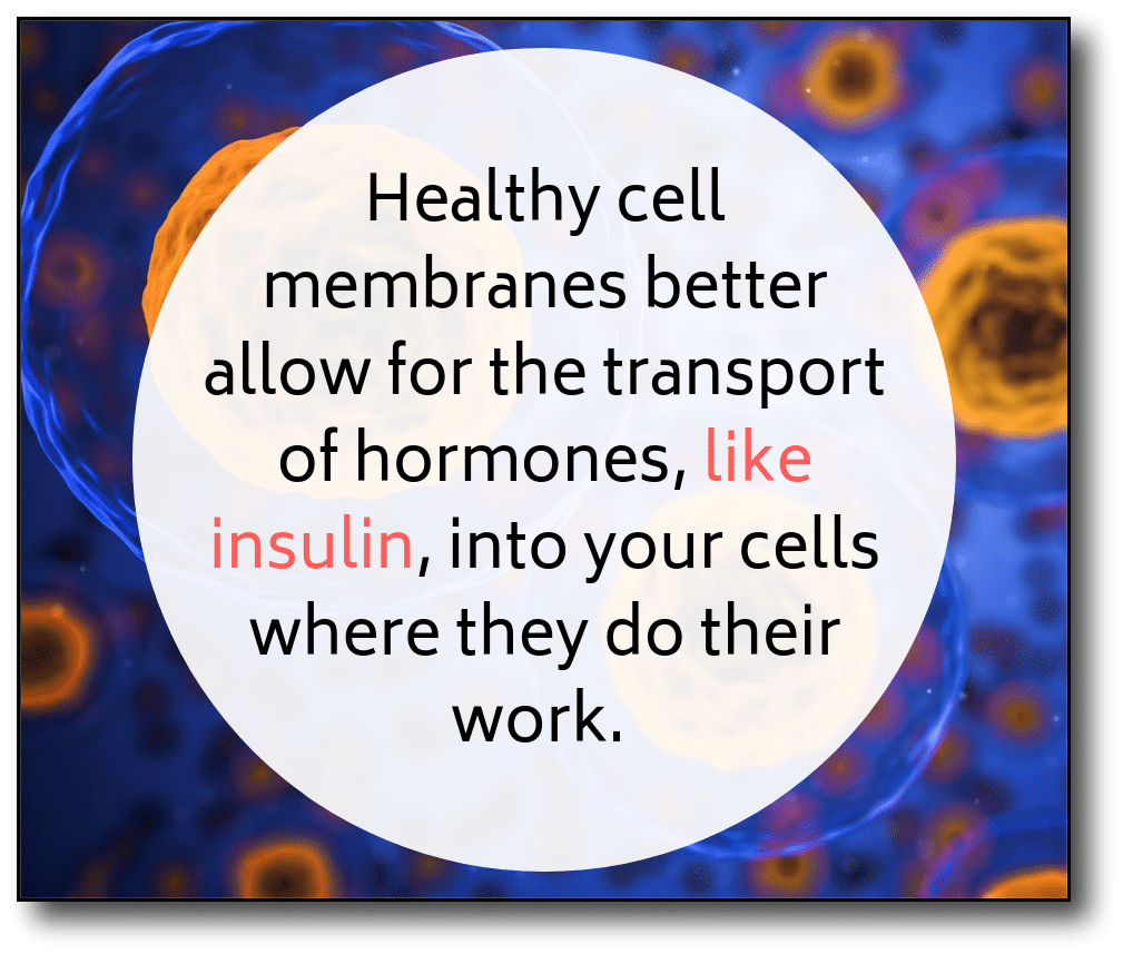 weight loss after menopause - cell membrane